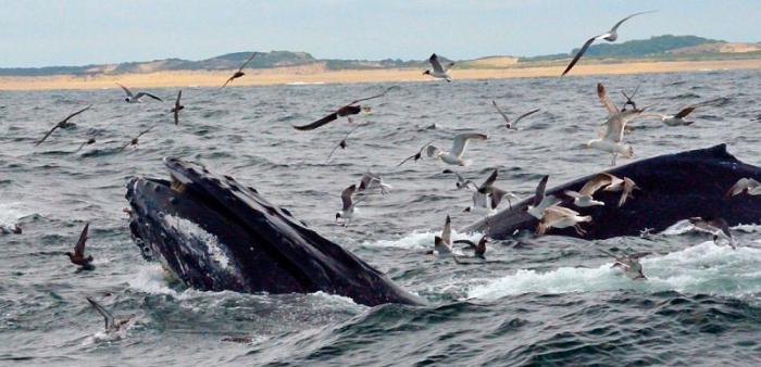 Секс большие киты
