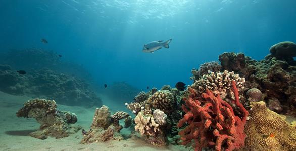 Риф большой коралловый риф подводный