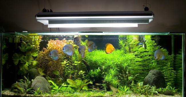 сделать морской аквариум своими руками