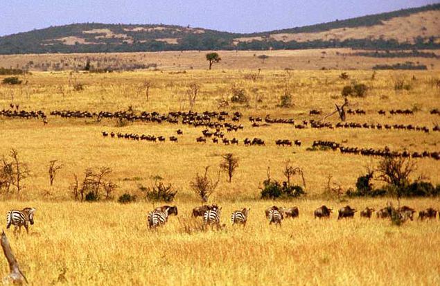 где находится саванна в африке