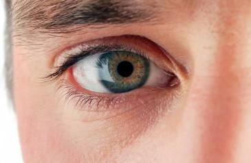 Что значит, если мужчина смотрит в глаза?