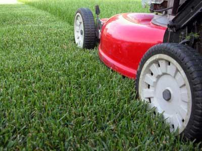 когда лучше сеять газонную траву