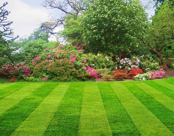 когда можно сеять газонную траву