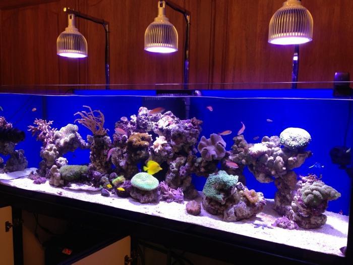 Светильник для аквариума подвесной 54