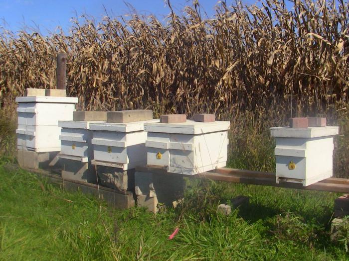 ульи для пчел из пенополистирола
