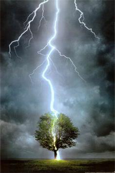 гроза дерево