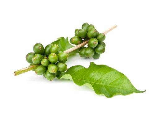 Зеленый кофе свойства