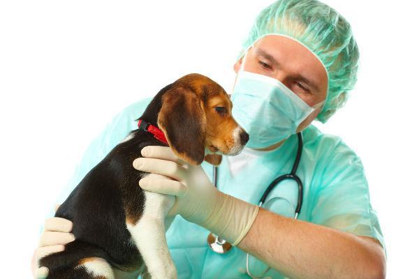 Чипирование собак что это такое