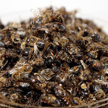 Что лечит пчелиный подмор