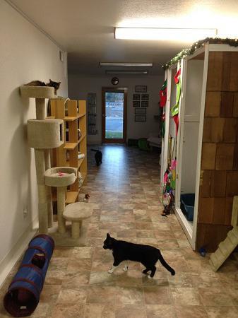 Игровые уголки для кошек