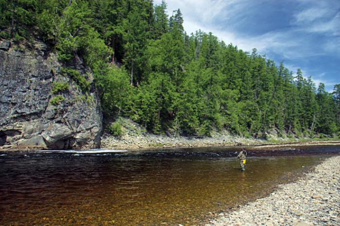 река Зея фото