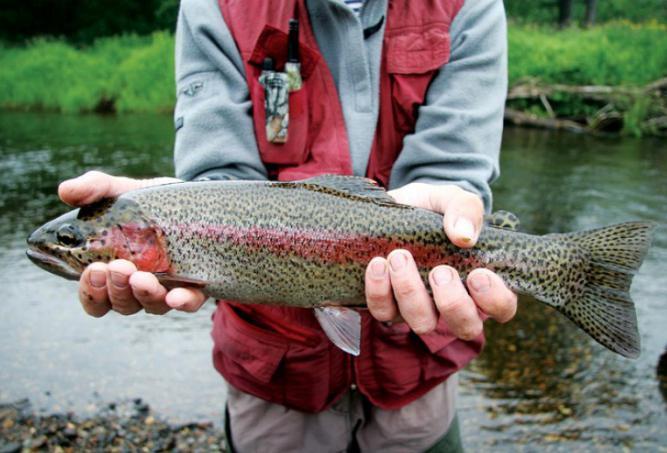 на что ловить в реке зея