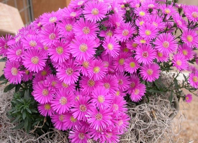 Цветы октябринки