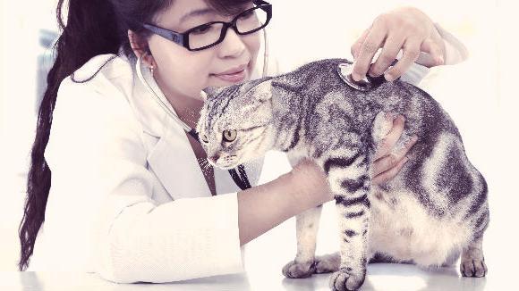 кальцевирусная инфекция у кошек осложнения