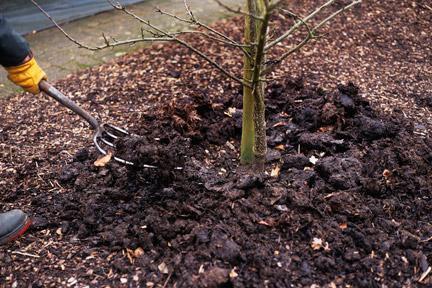 Обработка деревьев осенью