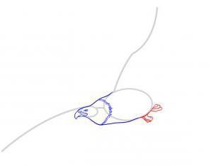 Как нарисовать орла