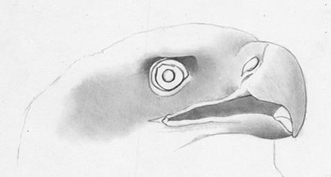Как поэтапно нарисовать орла