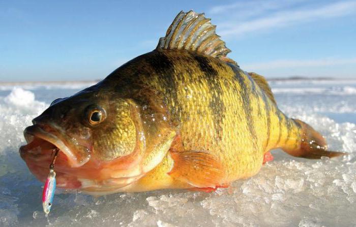 Безопасность зимняя рыбалка