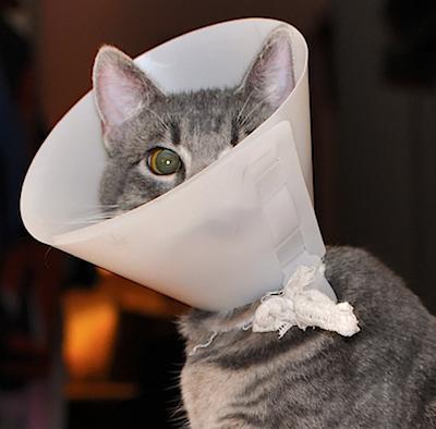 Воротник у кошки своими руками