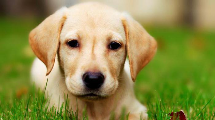 рассказ про домашнее животное собака