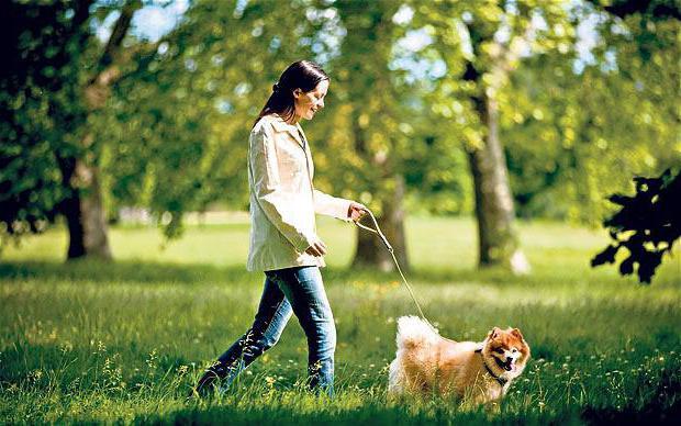 ежедневная ходьба пешком польза