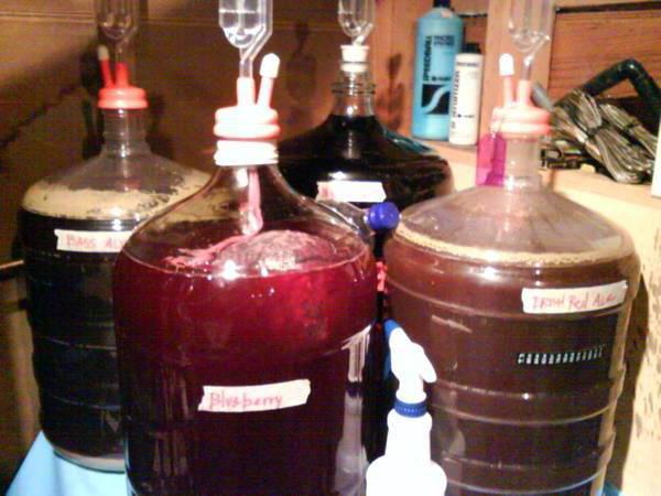 Рецепт домашнего вина из голубики в домашних условиях 348