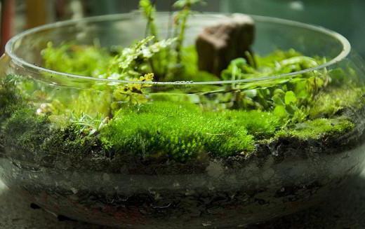Как правильно посадить мох