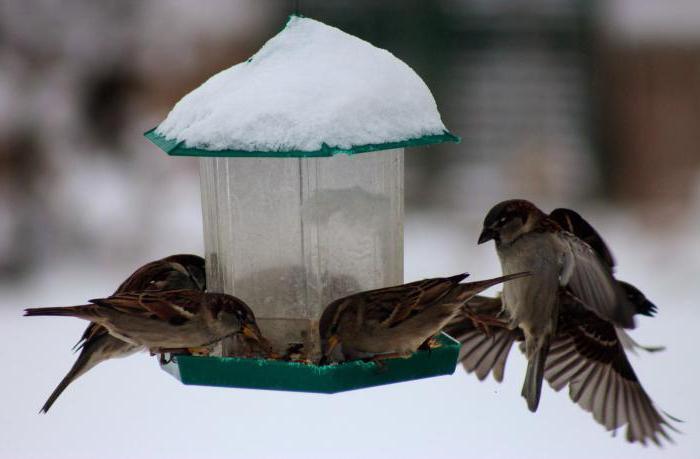 как помочь животным в зимнее время 2 класс