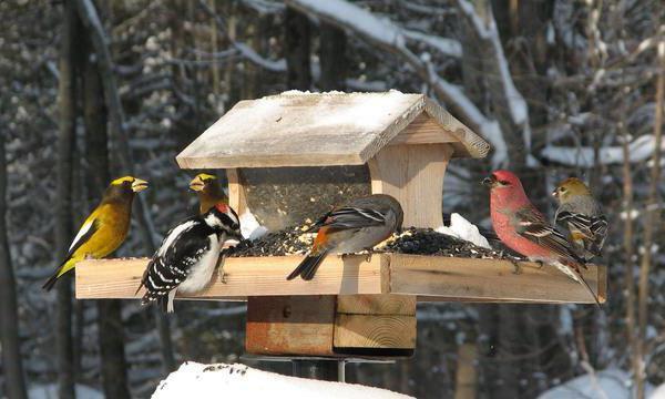 как помочь животным в зимнее время