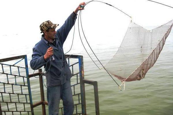 Рыболовная Верша Паук: Реальные Отзывы Покупателей о Spider Fish