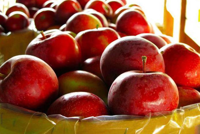 яблочное вино из жмыха