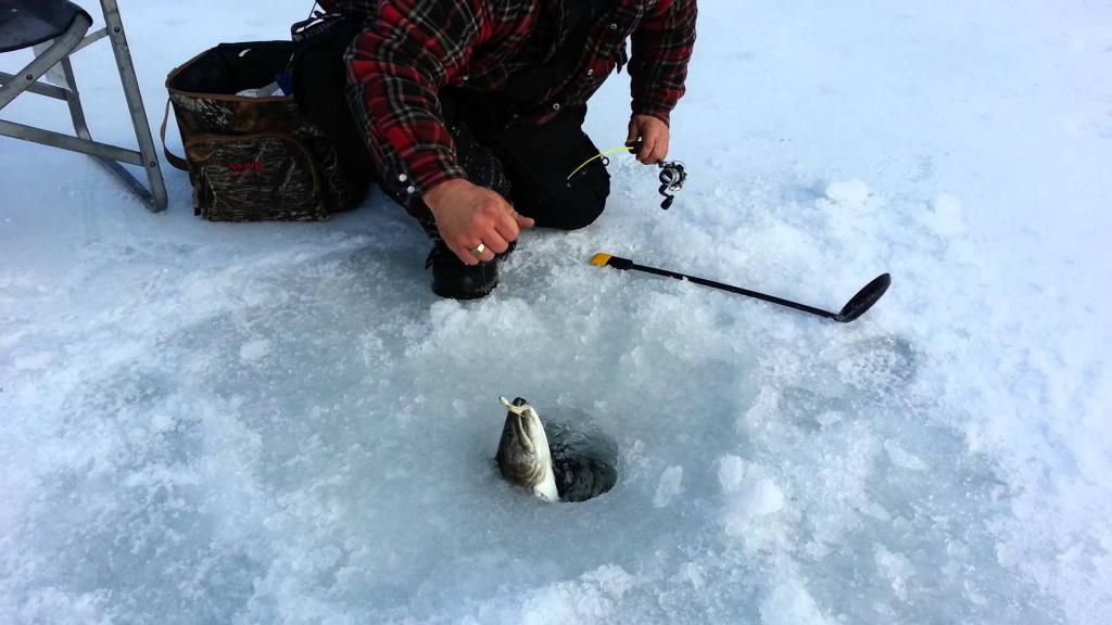 Зимняя рыбалка фунтусова фото