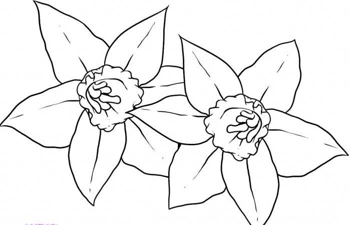 Нарисованный цветок карандашом