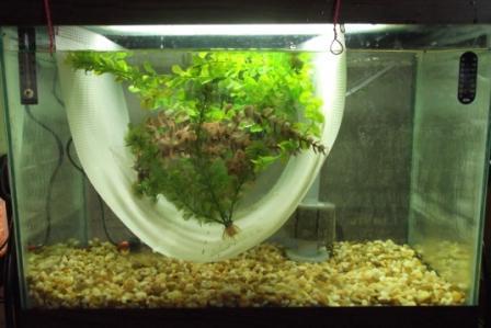 как избавиться от лишних улиток в аквариуме