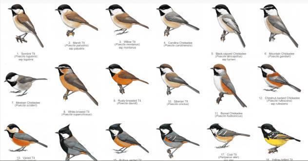 картинками с названием и птицы все