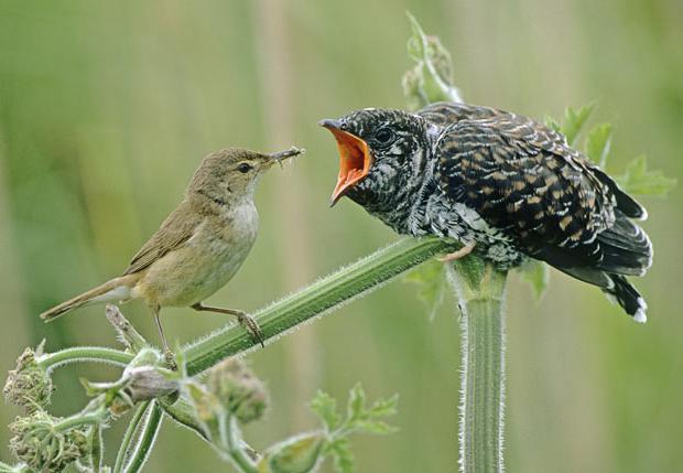 паразиты от птиц к человеку