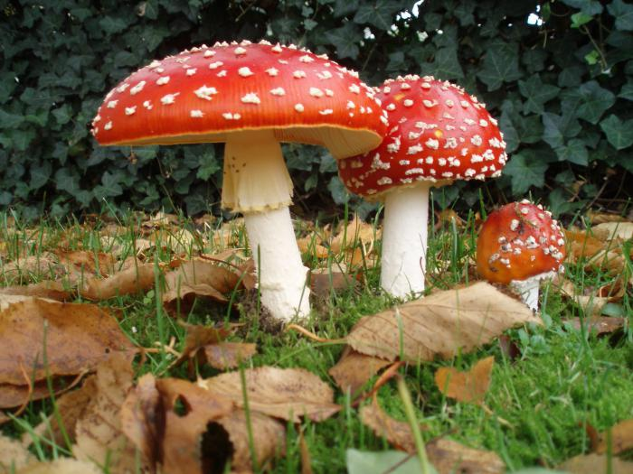 гриб паразит человека