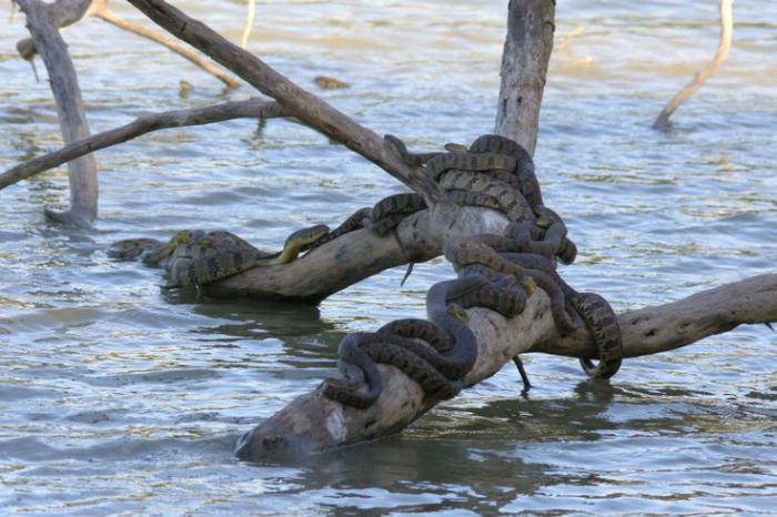 к чему снится много змей в воде