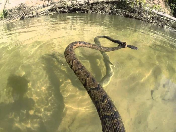 к чему снится змея большая в воде