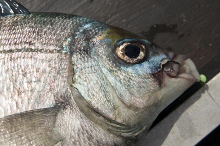 какая рыба будет клевать завтра на камеру