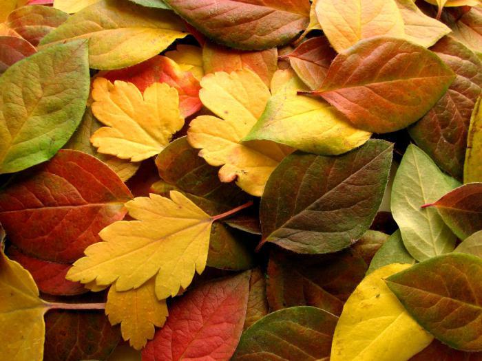узор из опавших листьев фото