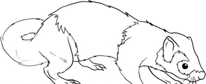 Как нарисовать хорька поперек