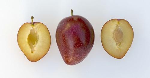Сливово-вишневый гибрид мейнор