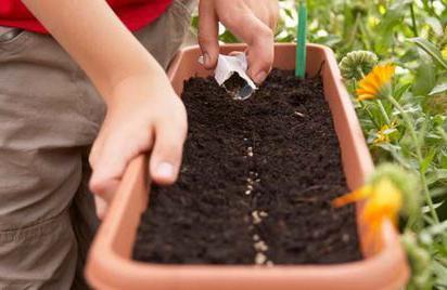 Выращивание клубники семенами