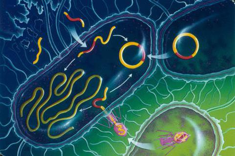 Современные антибактериальные препараты 46