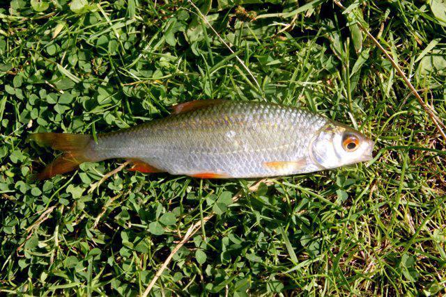 какая рыба клюет в конце ноября