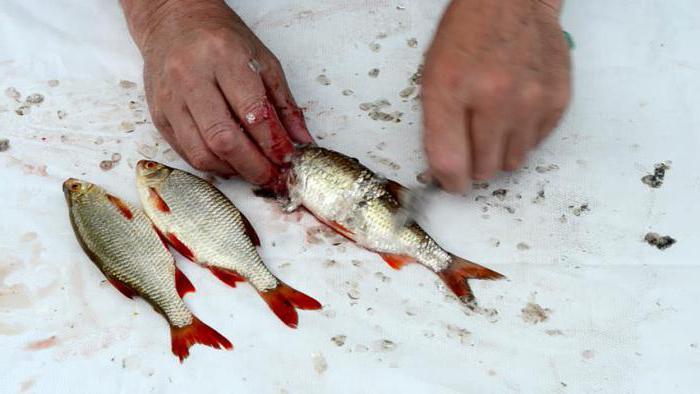 как чистить рыбу в домашних условиях
