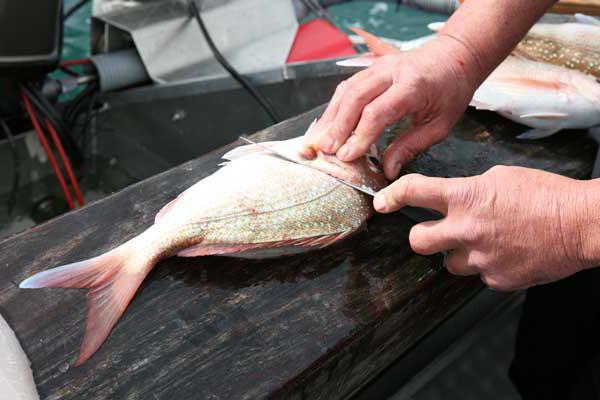 приспособление для чистки рыбы