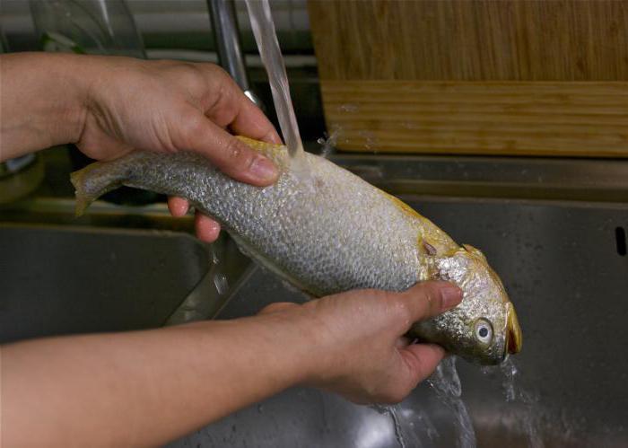 Чешуя рыбы своими руками