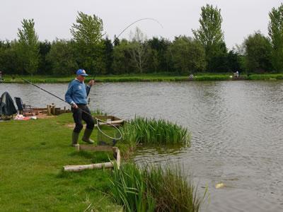 как ловить толстолобика на удочку на реке